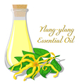 Essential oil of ylang-ylang vector image vector image