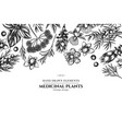 floral design with black and white angelica basil vector image vector image