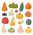 fresh pumpkin decorative seasonal ripe food