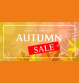 limited time autumn sale banner horizontal flat vector image