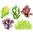 realistic sea weeds food set vector image vector image