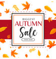 autumn sale background with leaves pattern vector image vector image