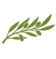 green olive branch symbol vector image
