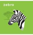 Zebra on green backdrop vector image