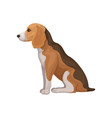 flat icon of beagle in sitting position vector image vector image