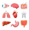 human organs anatomy realistic set vector image
