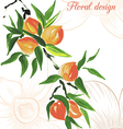 peach design card vector image