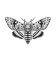 acherontia styx butterfly isolated vector image vector image