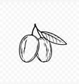 argan oil nut and leaf sketch icon vector image vector image