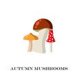 mushrooms on the white background vector image vector image