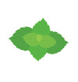 fresh mint leaves on a white background vector image vector image