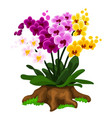 multicolored orchid flowers growing on a stump vector image vector image