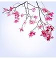 spring blooming sakura branch blots background vector image