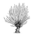 cartoon drawing of willow or sallow tree vector image