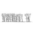 cartoon drawing of group or alley of poplar trees vector image