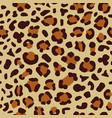 leopard seamless print vector image vector image