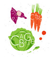 vegetable set sweet potato carrot cabbage vector image