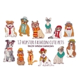 Cute cats and dogs fashion hipster isolated pets vector image