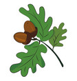 cartoon image of acorns vector image vector image