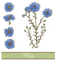 colored flax in hand drawn style vector image vector image