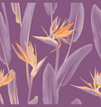 orange and violet south african tropical flower vector image