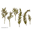 set hand drawn colored rosemary vector image vector image