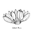 hand drawn of bunches of ripe asian banana vector image vector image