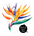 hand drawn sketch watercolor tropical flower bird vector image