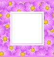 pink cosmos flower banner card vector image vector image