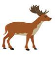 deer in simple style vector image