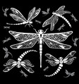 set of decorative dragonflies vector image vector image