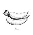 hand drawn of fresh ripe golden banana vector image vector image