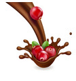 red cranberry in splash chocolate vector image vector image