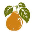 single orange simple pear with green leaves ripe vector image vector image