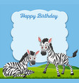 zebra on happy birthday card vector image