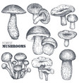 collection hand drawn mushrooms in vector image vector image