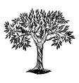 olive tree engraving vector image vector image