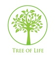 symbol of the tree of life vector image vector image