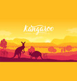australia kangaroo on landscape nature background vector image