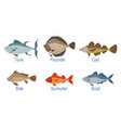 collection fish species with name subscription vector image vector image