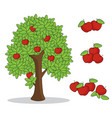 red apple on tree with white background vector image