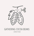simple logo template gathering cocoa beans vector image vector image