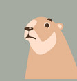 cartoon marmot flat style vector image vector image