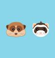 cute ferret and meerkat muzzle flat design vector image