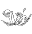 decorative poppies vector image vector image
