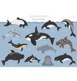 dolphins set marine mammals collection cartoon vector image vector image
