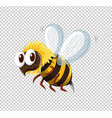little bee flying on transparent background vector image