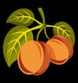 vegetarian organic food simple two ripe vector image vector image