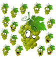 wine grape vector image vector image