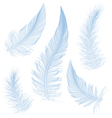blue feathers vector image vector image